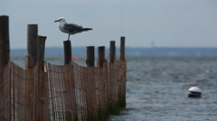 Seagull atop a wooden post. - stock footage