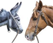 horse head against a head of a donkey - stock photo