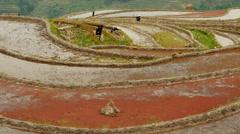 Farmer working on rice field Stock Footage