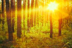 Autumn Forest Under Sunset Sunbeams. Autumn Deciduous Forest At - stock photo