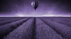 Lavender field Summer sunset landscape with hot air balloon toned Stock Photos