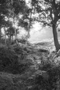 Stock Photo of Stunning sunrise landscape in misty New Forest countryside in black and white