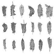 Set of feathers - stock illustration