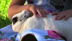 Girl hands gently stroking the rabbit on her lap. Slow motion. Close up. Stock Footage