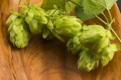 Fresh green hop cones - stock photo