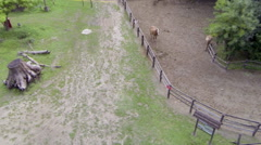 Horses in the zoo Stock Footage