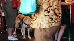 Seeing eye dog at farmer's market. Stock Footage