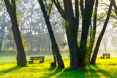 Sunny summer park with trees and green grass Stock Photos