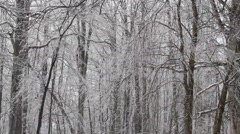 Winter in the Forest Stock Footage