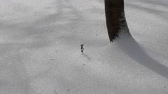 Single Plant Peaking through the Snow Stock Footage