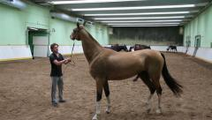 Thoroughbred horses in the indoor arena Stock Footage