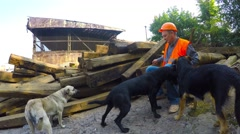 Working with the railway sits on the old sleepers with stray dogs Stock Footage