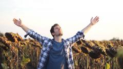 Young man in sunflower field Hands of Freedom - stock footage