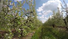Road in between fields of apple-tree, timelapse 4K Stock Footage