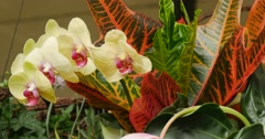 Bouquet Of Flowers Floral Composition Orchid Branch Red Orange Green Big Leaves Stock Footage