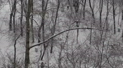 Winter in the park. Snowing. Stock Footage