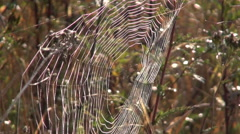 Stock Video Footage of Cobweb in autumnal meadow in morning sun