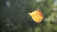 Stock Video Footage of leaf in cobweb