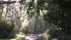 sun rays shine on country road 2 - stock footage