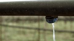 Goji berry plantation farm.Water irrigation system close up. Stock Footage