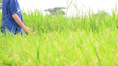 Young Boy check his rice field - stock footage