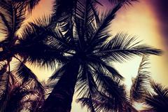 Silhouette palm tree - Vintage filter effect and light leak filter processing - stock photo