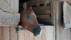 Horse in a stable. Close up shot at head Stock Footage