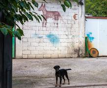 Beware of the dog Stock Photos