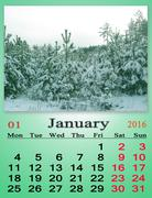 calendar for January 2016 with snowy pines - stock illustration