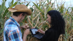 Stock Video Footage of Agronomist woman and Cowboy Farmer in Corn field 01