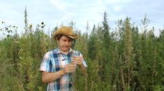 Farmer look in Cannabis Marijuana field 02 Stock Footage