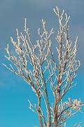 Ice covered branch - stock photo