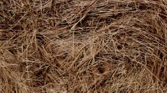 Hay. Background - stock footage