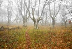 Autumn misty forest with fallen leaves. Stock Photos
