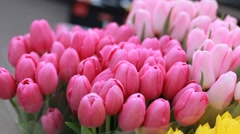bouquet of tulips in street - stock footage