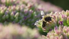 Bee flying away - Slow Motion (4x) Stock Footage