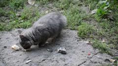 hungry stray kitten eats bread - stock footage