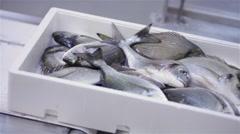 Fish market gilthead bream orata 05 - stock footage