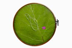 Green leaves on the hoop Stock Photos
