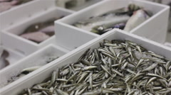 Fish market sardines 02 Stock Footage