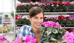 Smiling woman, in greenhouse with cyclamen plants Stock Photos