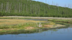Yellowstone National Park, Madison River - stock footage
