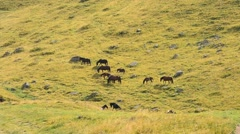 Herd of horses walking on pasture in mountains in late summer Stock Footage
