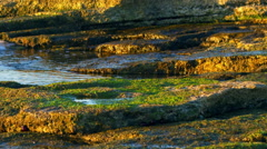 Royalty Free Stock Video Footage of the mossy shore at Dor Beach shot in Israel Stock Footage