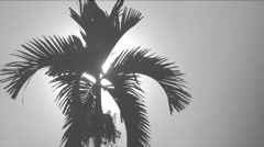 Silhouette of Palm Tree Against Sun Stock Footage