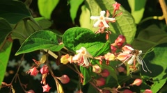 Beautiful bush with flowers in last sun rays of the day Stock Footage