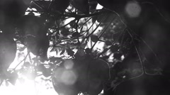 Stock Video Footage of Bush with flowers