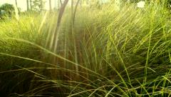 Green grass with movement and sunlight in the park 4K High Quality.MXF Stock Footage
