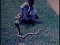 Snake Charmer, 1940's Archive Footage - stock footage