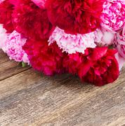 Pink and red  peonies Stock Photos